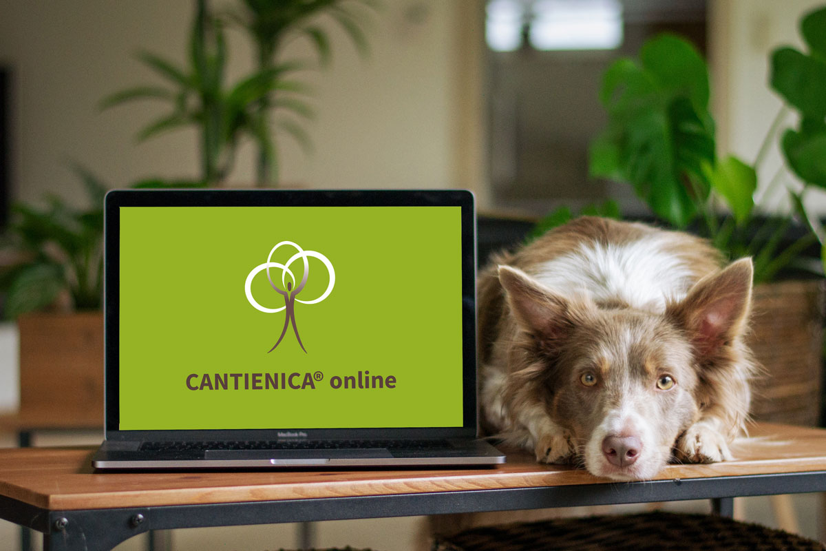 Cantienica Online-Kurs